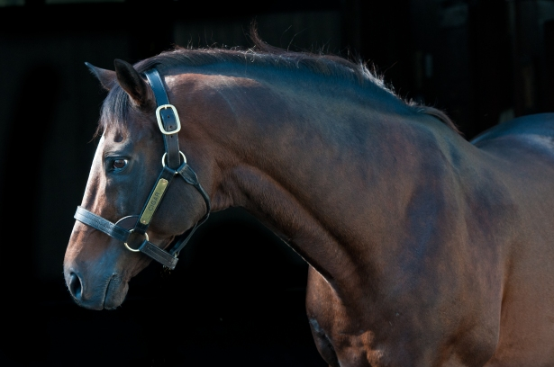 Photo: James Shambhu, Kentucky Horse Park